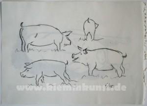 Schwein_1