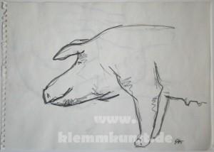 Schwein_2