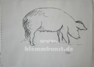Schwein_4